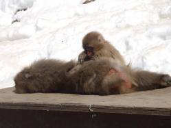 monkey_pairp.jpg