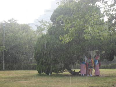 20080815雨宿り