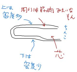 ちんこ(図解)