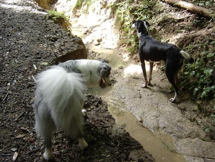 エンドレスファーム森林浴3
