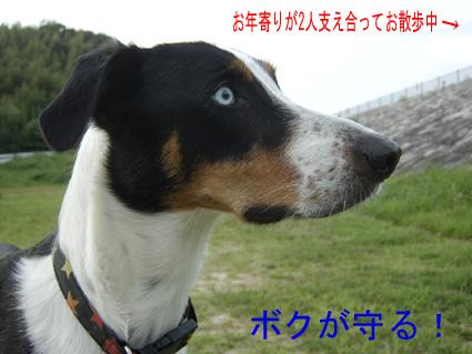 原っぱパトロール隊員キラ2