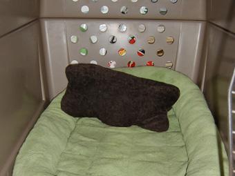 アンリーちゃんの枕、バリに持ち込み中