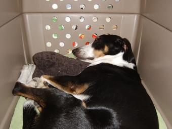 アンリーちゃんの枕、大事にお昼寝中