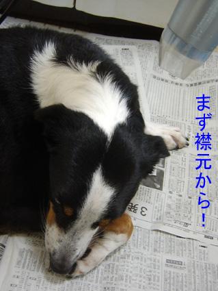 朝シャン1