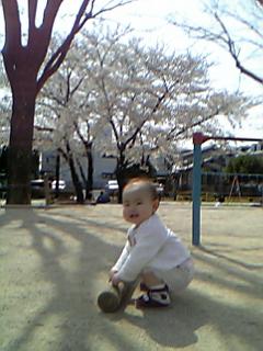 senasakura1.jpg