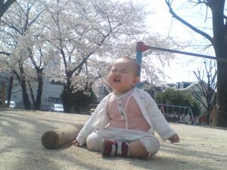 senasakura2.jpg