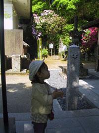 tsutsuji2.jpg