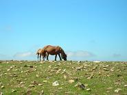 caballo18jul.jpg