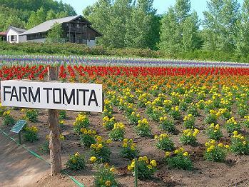 tomitafarm3.jpg