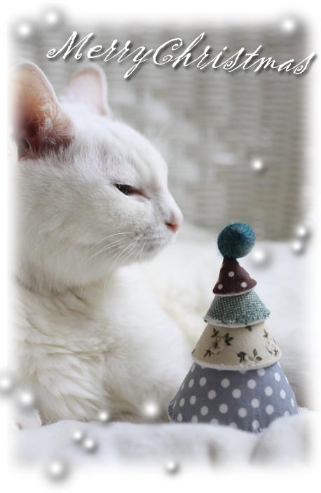 猫にも神の祝福を