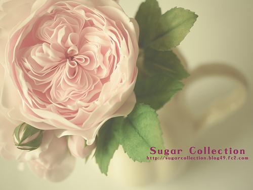 english roses up