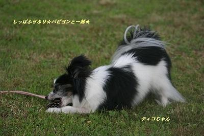 ティコちゃん