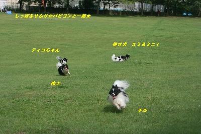 広い芝生で