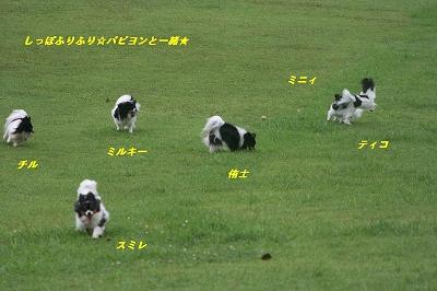 広い芝生で3