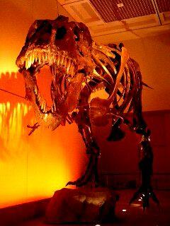 ティラノサウルスのスー
