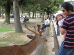鹿と一緒に