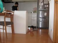 台所からSちゃん