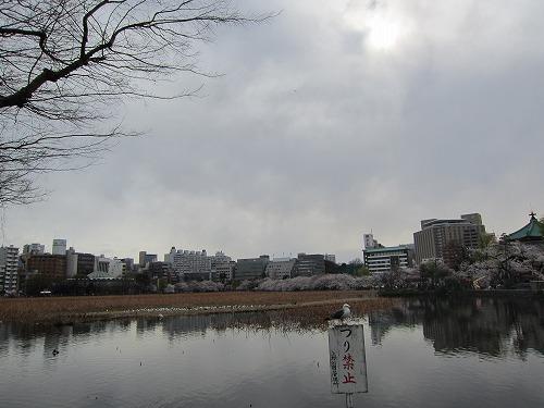 上野公園 3