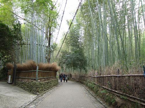 竹林の道 1