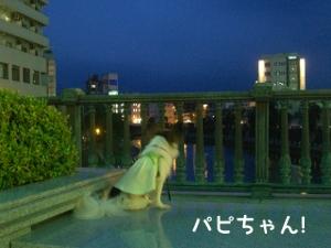 090714-miyanohashi3