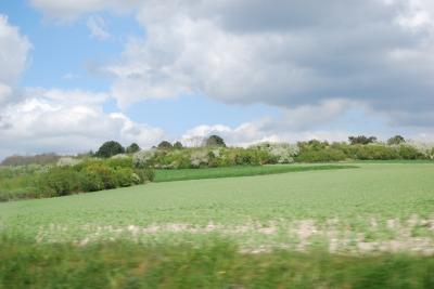 郊外の野原