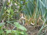 畑の中の子猫