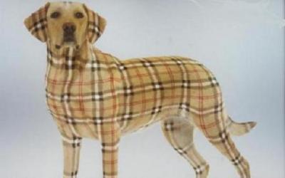バーバリー犬