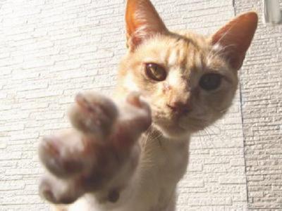 猫とじゃんけん