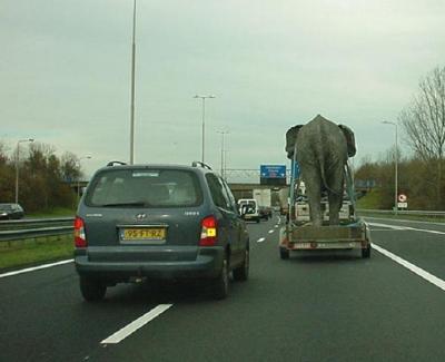 ゾウ運搬中
