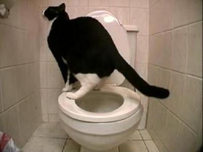 トイレにゃん