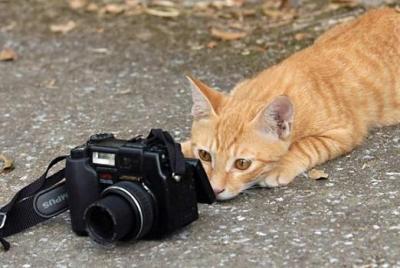カメラミャン