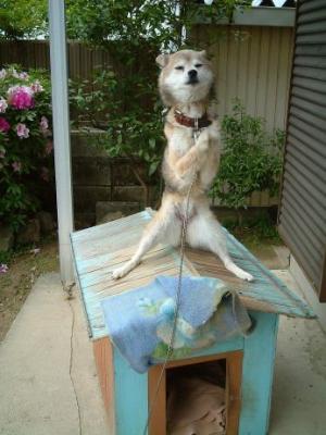 三角屋根プレイ