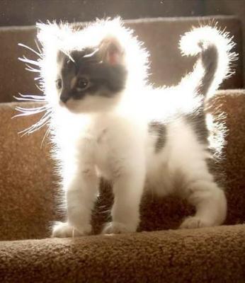 スーパーサイア猫