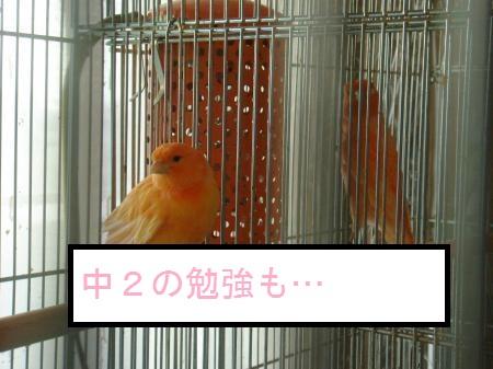 DSC03356 - コピー