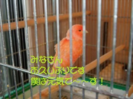 yomogi 001