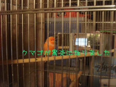 DSC03087_convert_20100217093610.jpg