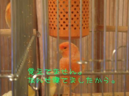 DSC03205_convert_20100302190513.jpg