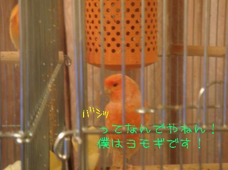 DSC03205_convert_20100321184151.jpg