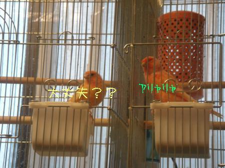 DSC03307_convert_20100301173355.jpg