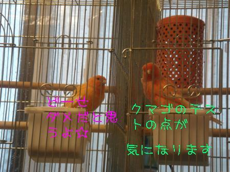 DSC03308_convert_20100304180645.jpg