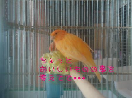 DSC03327_convert_20100318160930.jpg