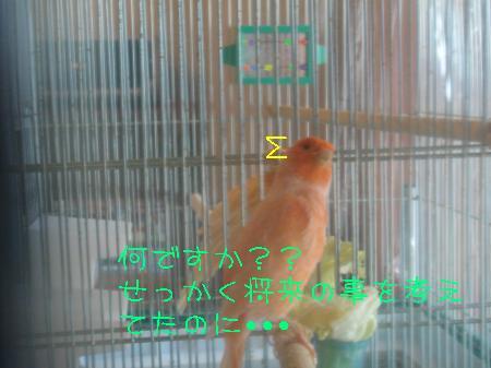 DSC03328_convert_20100220115058.jpg