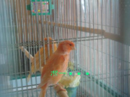 DSC03329_convert_20100220114746.jpg