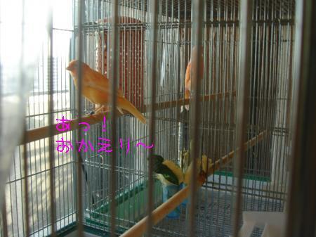 DSC03336_convert_20100318160649.jpg