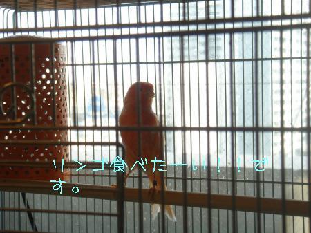 DSC03341_convert_20100318161341.jpg