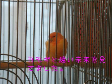 DSC03352_convert_20100325211921.jpg
