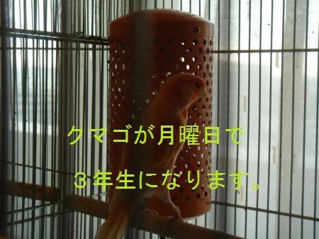 DSC03357_convert_20100403202051.jpg