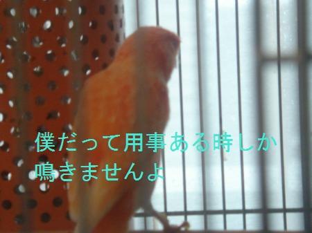 DSC03361_convert_20100407185708.jpg