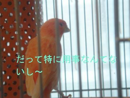 DSC03362_convert_20100407185130.jpg