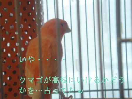 DSC03362_convert_20100728172205.jpg